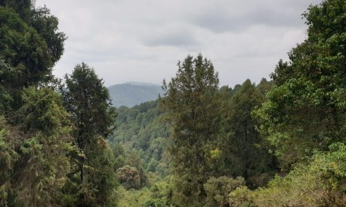 Chilimo Gaji Forest